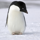 Guest Blogging in a Post-Penguin World